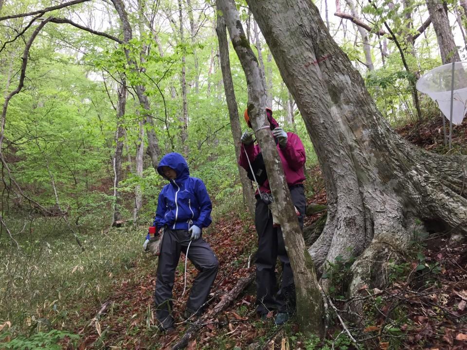 広葉樹林での樹木の調査(北茨城)