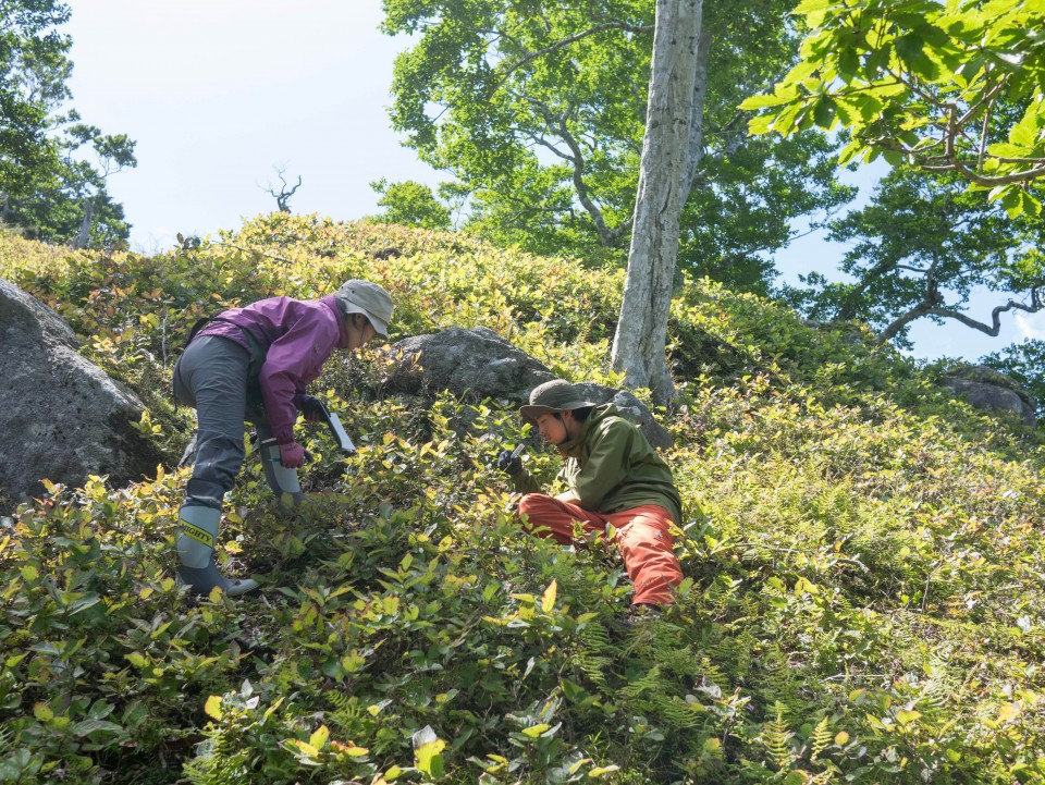 シカによる植生への影響調査(金華山)