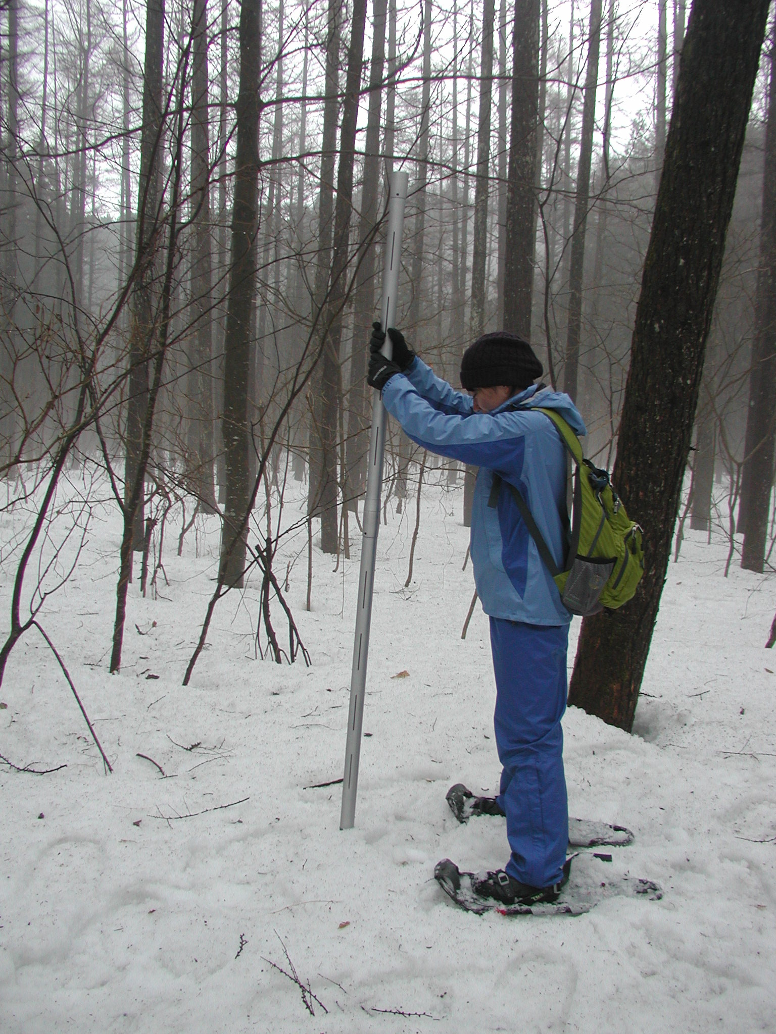 Snow survey in a larch stand
