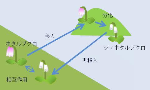 種多様化ソースとしての島の役割
