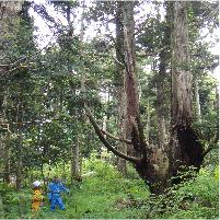 植物の目に見えない遺伝的特徴を明らかにする