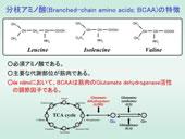 【アミノ酸代謝図】食肉の最も重要な味成分「グルタミン酸」と、分枝アミノ酸(BCAA)の代謝経路の一部概要です。