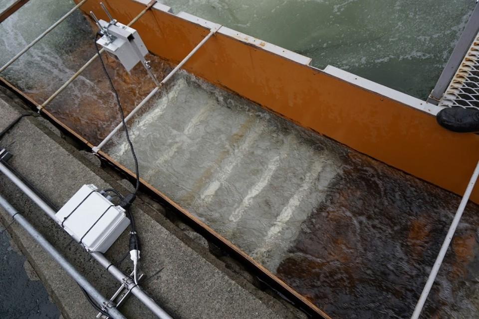 魚道を遡上するサケを計測中の魚カウンター