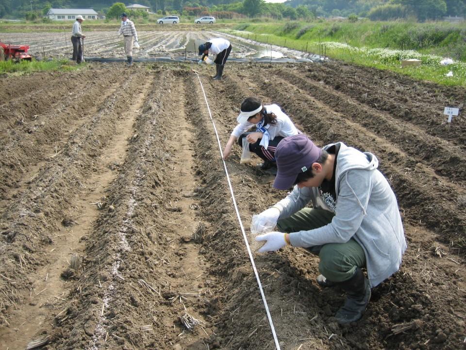 現地圃場でのダイズ播種作業(南相馬市)