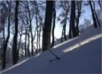 雪が創り出す日本海側のブナ林