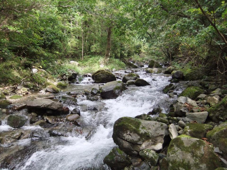 佐渡の調査河川。