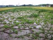 7.13水害<br />洪水で土砂が堆積した水田