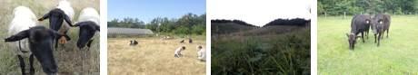 五十嵐キャンパスの羊<br />草地の植生調査実習<br />ススキ草原(川渡旧IBP生態観測試験地)<br />シバ草地と牛放牧(藤荷田山生態観測試験地)