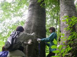 山形県飯豊山麓でのブナ原生林調査実習