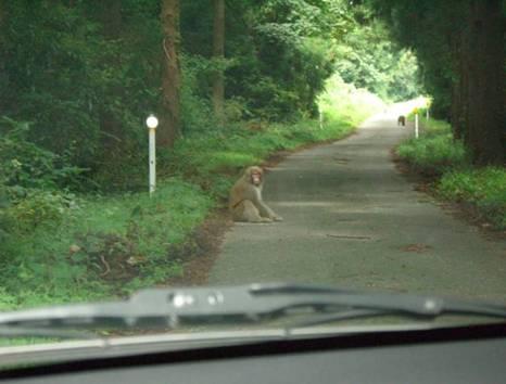 車内から撮影。車が通っても逃げません。