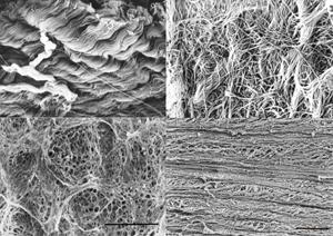 生体内における様々なコラーゲン線維の構造