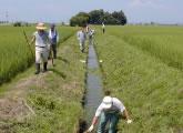 カワ掃除の様子<br />土砂や草を取り除く作業はおいしいお米をつくる上で欠かせません。