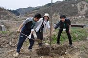 福島からの桜の植樹<br />交流のある南相馬市から贈られた桜を山古志に植える行事に参加しました。