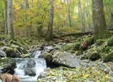 ツキノワグマやイワナの生息する奥秩父の天然渓畔林