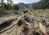 洪水の撹乱を受けた只見町伊南川のヤナギ林