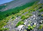 富士山森林限界上部の植生