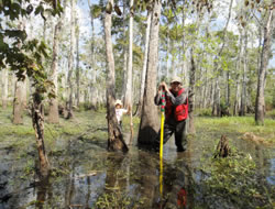 ミシシッピの湿地林で調査