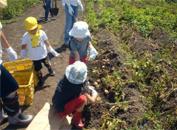 ふれあい農園の収穫作業