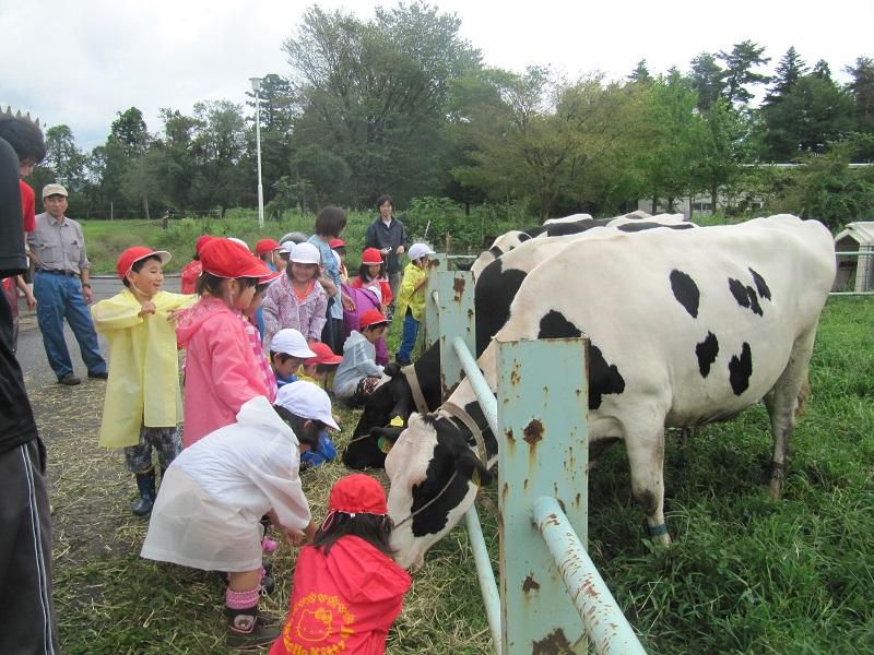 小学生の酪農体験