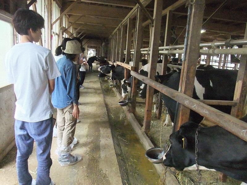 酪農家見学